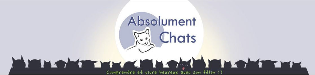 banniere absolument chat